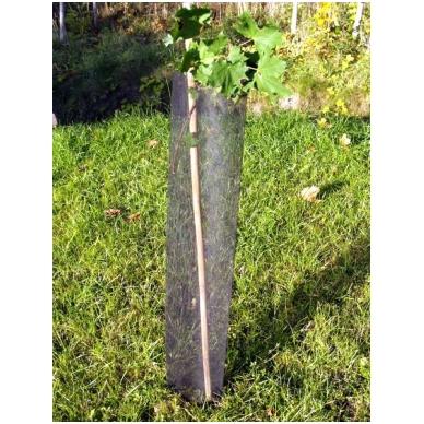 Medelių apsauga TREE GUARD 7X7 rulonas 100 m 3
