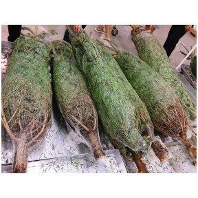 Kalėdinių medelių pakavimo maišai HDP 40 cm 10x100